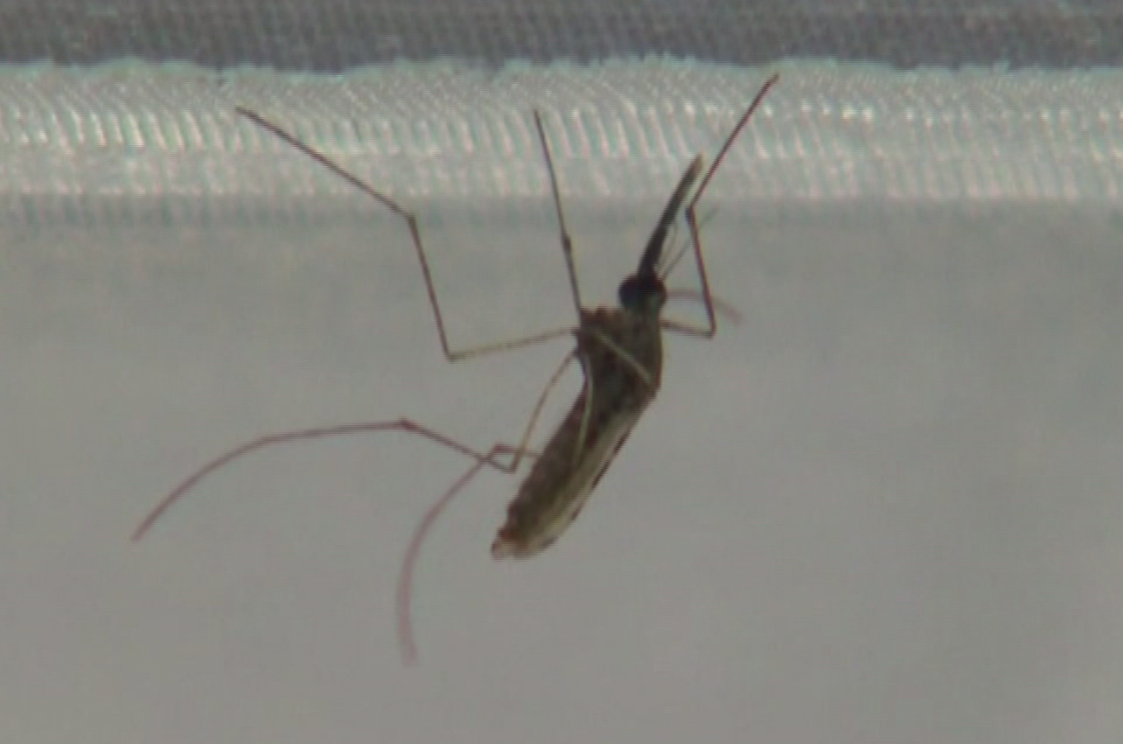 2 deaths from West Nile virus in Maricopa County this season